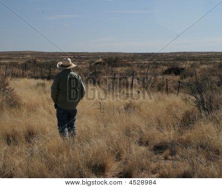 Cowboy In Desert