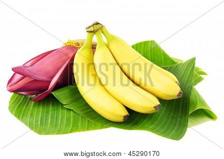 Fresh banana fruits with a banana blossom on banana leaves