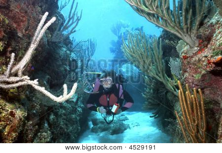 Woman Scuba Diver In Roatan