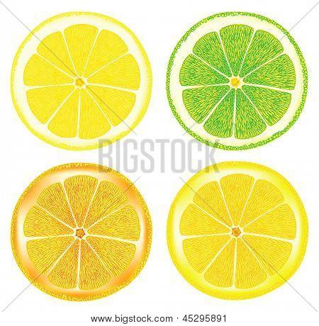citrus fruit. Rasterized illustration. Vector version in my portfolio