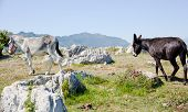 foto of headstrong  - View of two Donkey in the spanish countryside - JPG