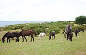 stock photo of great horse  - Herd of horses grazing in the spanish countryside - JPG