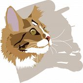 Cat Head Close-up In Vector Format