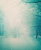 foto of snow forest  - Nature winter snow background - JPG