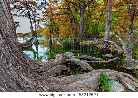 Beautiful Fall Foliage on Giant Cypress Trees Lining the Crystal Clear Frio River in Texas