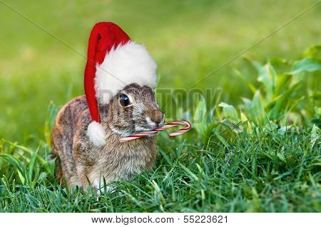Christmas cottontail bunny