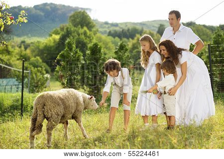 Family feeding animal on the farm