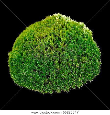 Green Moss On Black Background