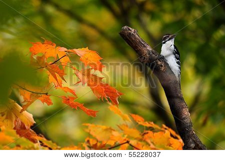 Woodpecker perched on a branch