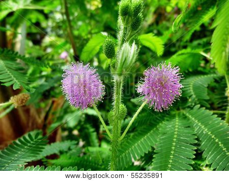 Exotic Plant With Violet Blossoms