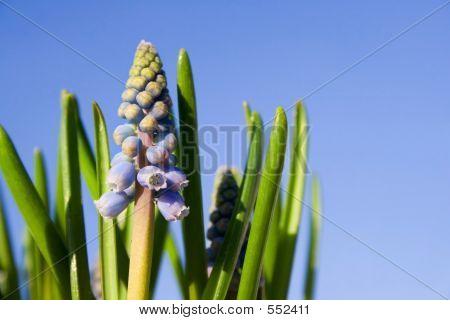 Primavera - flor