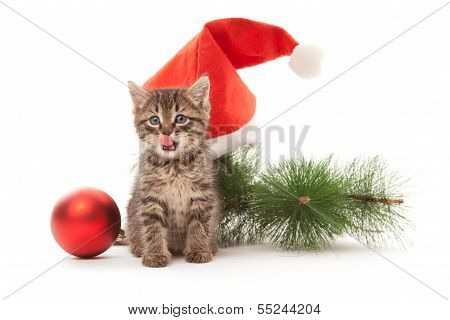 Kitten Smacking One's Lips With New Year Decorations On Its Back