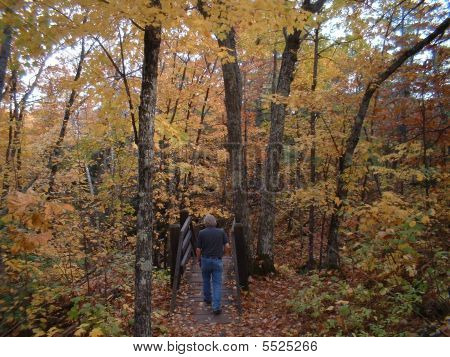 Walking In Autumn Woods- Male