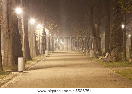 The avenue of city park,  at night in a winter fog