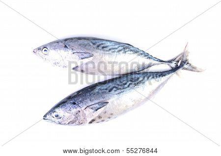 Tuna Isolated On White Background