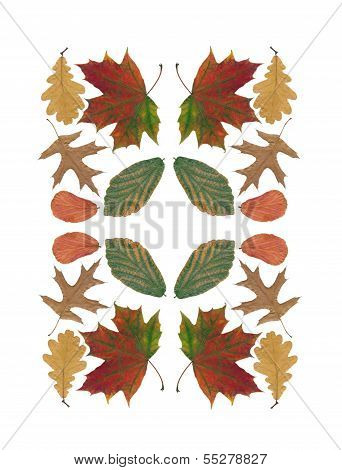 arrangement of multicolor various leaves as pattern for tablecloth