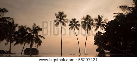Tree Palms In Sunset Scenary