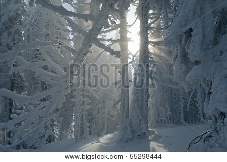 Fantastic Winter Forest