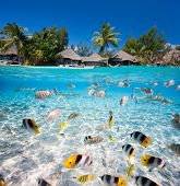 stock photo of under sea  - Beautiful tropical island in French Polynesia under and above water - JPG