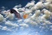 pic of stork  - stork in flight bringing  basket on cloudy sky background - JPG