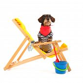 picture of long-haired dachshund  - Wire haired dachshund in beach chair isolated over white background - JPG