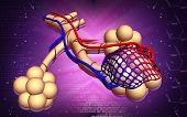 pic of bronchus  - Digital illustration of  alveoli  in  colour  background - JPG