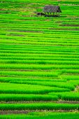 Terrace rice fields 2