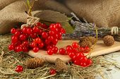 Red berries of viburnum on stand with hay and bumps on table on sackcloth background