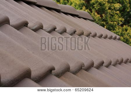 Roof with brown roofs