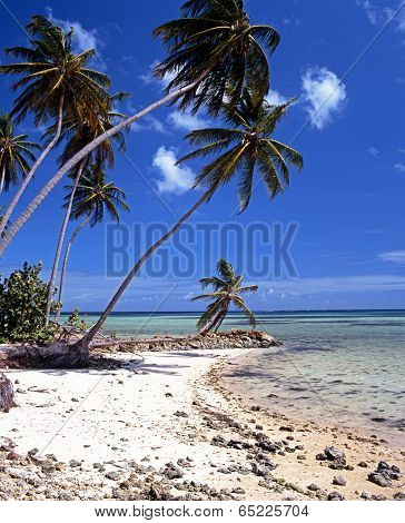 Palm trees on the beach, Tobago.