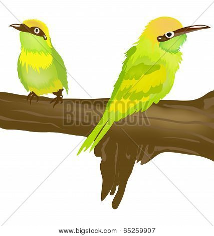 Two Tropical Birds