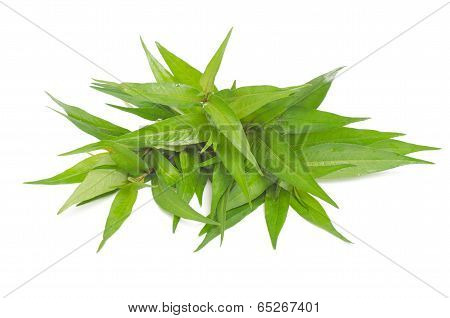 Vietnamese mint isolated on white background