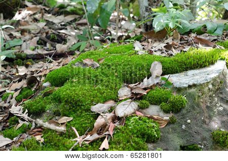 Moss Growing On Stone In Rain Forest, Thailand