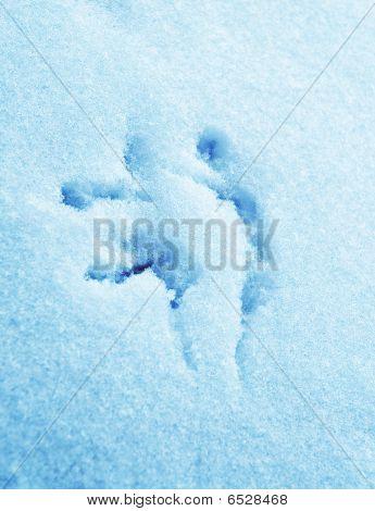 Hieroglyphs On To Snow