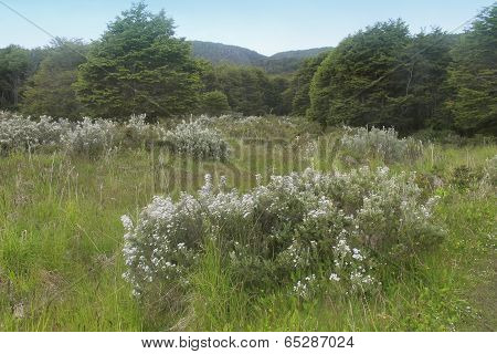 Patagonian Landscape. Meadows With Plants And Trees.