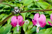 foto of claddagh  - A Claddagh ring and Bleeding Hearts in the Garden