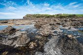 stock photo of petrified  - Ancient petrified forest on the coast at Curio Bay - JPG