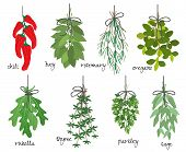 stock photo of chillies  - Vector illustration with eight different bunches of medicinal aromatic herbs with fresh red cayenne chilli peppers  bay  rosemary  oregano  rocket  thyme  parsley and sage on white with names - JPG