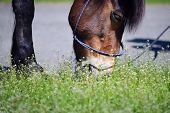 picture of horses eating  - Horse head close - JPG