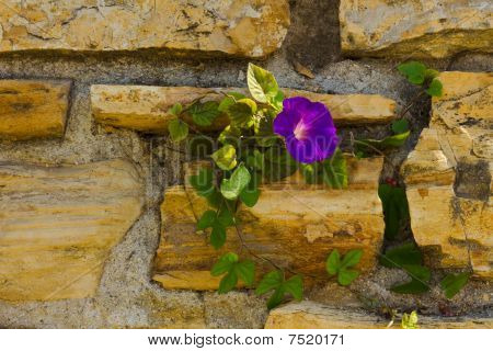 Old Flagstone Garden Wall