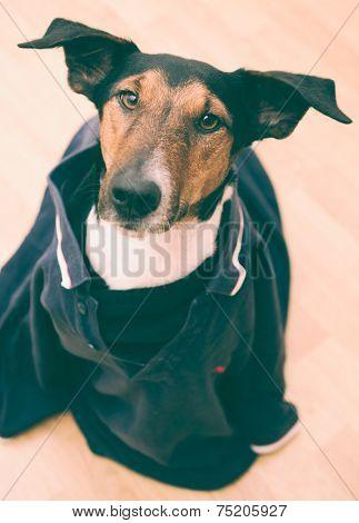 Dog dress like human