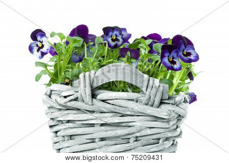 Sweet Pansies In Plait Basket -shallow Dof