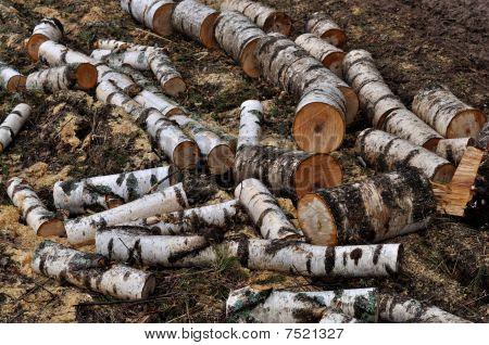 Pile Of Wet Birch Chocks