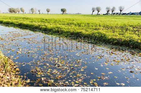 Fallen Leaves Floating On The Water