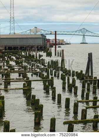 Abandoned Algae Covered Pier Logs With Astoria Bridge