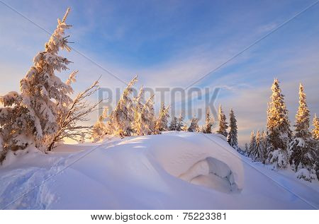 Winter forest in mountains. Snowdrifts. Evening landscape