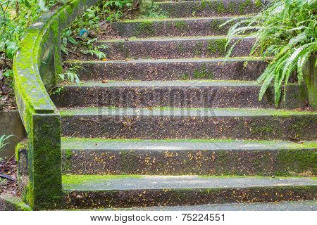 Stone Stair Covered With Moss In Thai Public Park