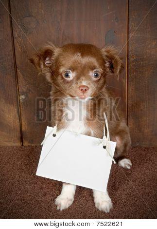 Filhote de cachorro com uma mensagem
