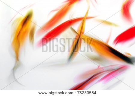 Koi Fish Swimming Abstract Watercolor