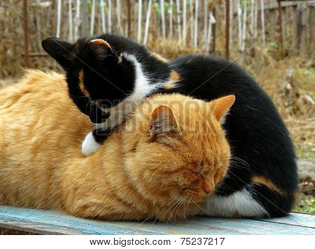 cats heating each other on the bench at cold autumnal day